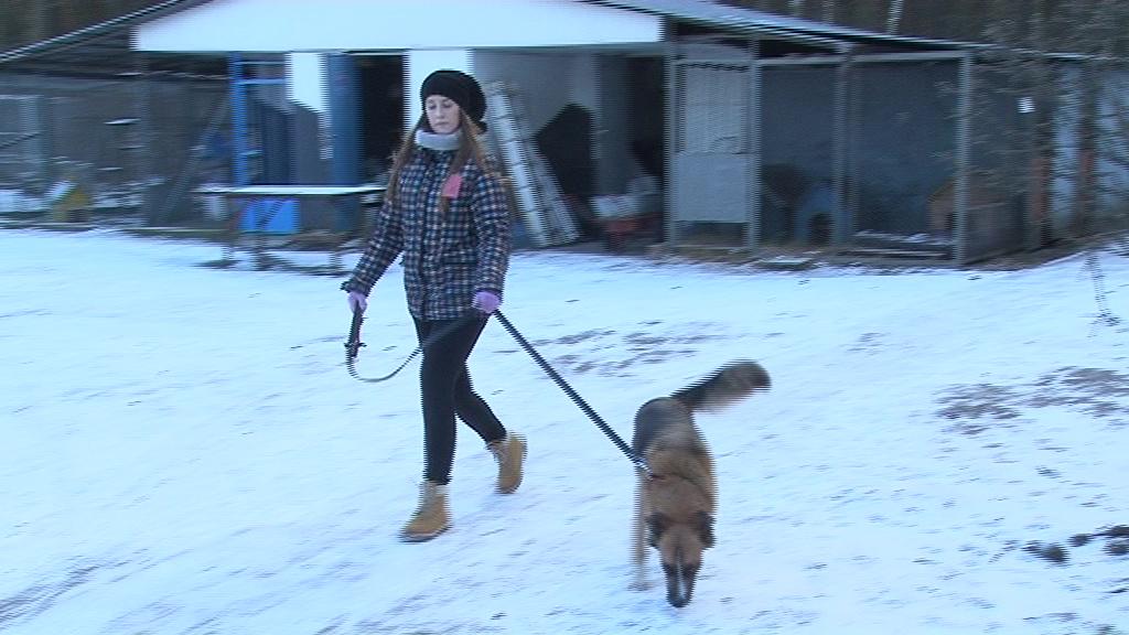 """17 lutego """"Bieg na 6 łap"""". Co przygotowało Schronisko dla zwierząt z tej okazji?"""