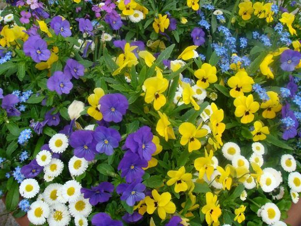 """""""Saniko"""" rusza ze sprzedażą kwiatów"""