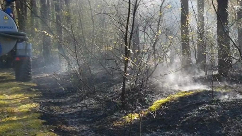 Płoną włocławskie lasy