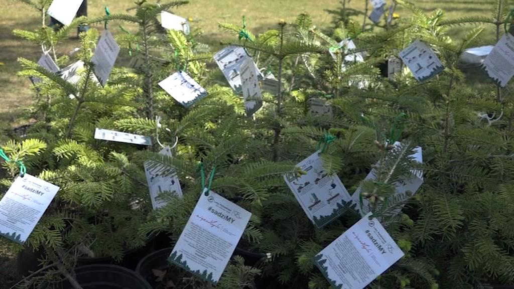 """Akcja """"#sadziMY"""": 250 drzewek rozdanych"""