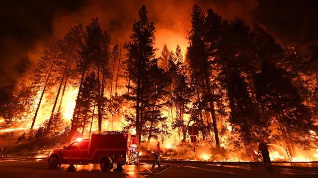 Uwaga! płoną lasy