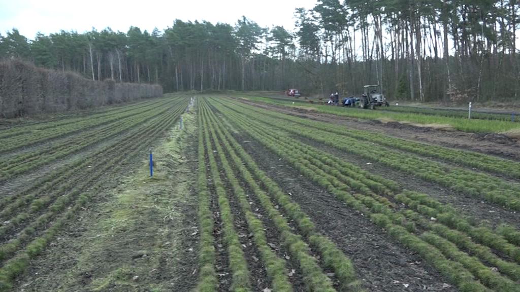 Zasadzą ponad 2 miliony nowych drzew!